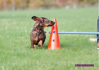 Crossdogging1