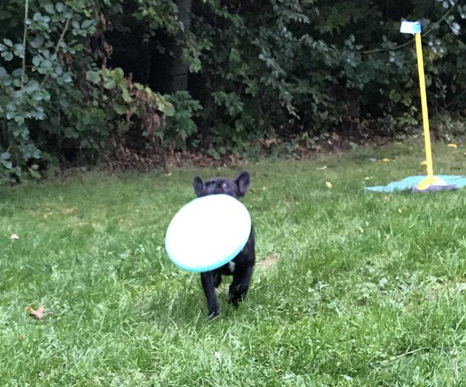 Apportieren eines Frisbee